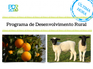 Programa de Desenvolvimento Rural (1)